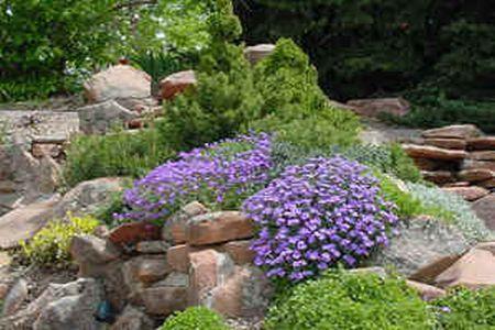 свой цитатник или сообщество!  На альпийской горке далеко не каждое растение может найти себе место.